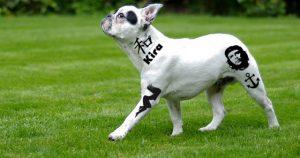 Hund mit Tattoos