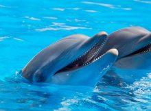 Zwei vergnügte Delfine