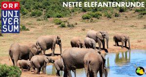 Elefantenherde rund um Wasserloch