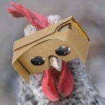 Käfighuhn dank VR-Brille ab sofort Freilandhuhn