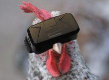 Käfighühner geben dank VR nun Freilandeier