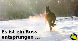 Entsprungenes Ross
