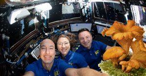 Raumstation ISS dank Eierschwammerl Coronavirus-frei