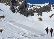 Tiergärten stellen Wildtiere für den Alpinraum zur Verfügung
