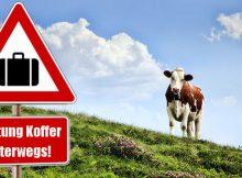 Immer mehr Koffer unterwegs: Almkühe sollen durch Warnschilder auf Gefahr hingewiesen werden