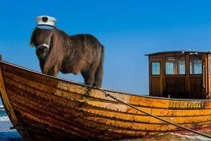 Traurige Nachricht: Weltberühmtes 'Over the Ocean'-Pony ist tot